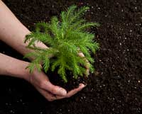 Planting trees for sustainability